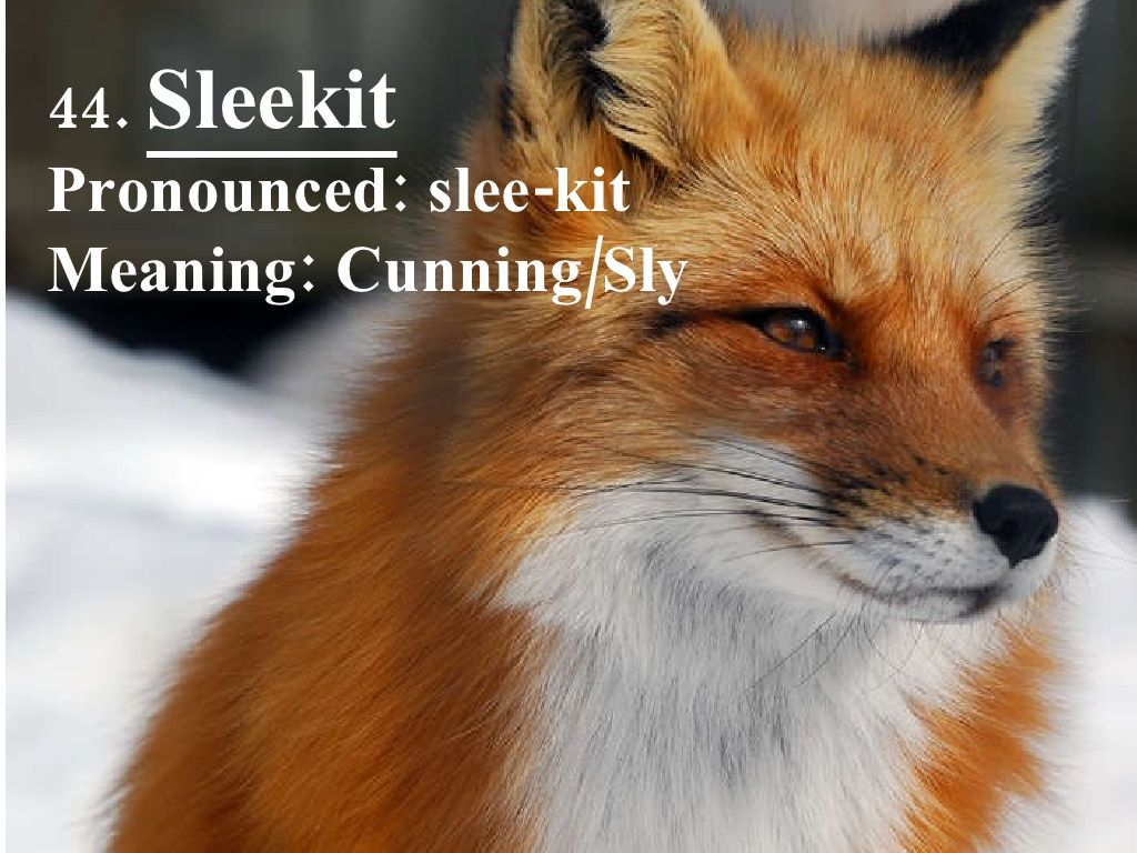 44  Sleekit Pronounced: slee-kit Meaning: Cunning/Sly | Scottish