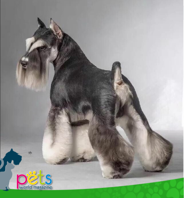 Buenos días  feliz fin de semana!  #PetsWorldMagazine #RevistaDeMascotas #Panama #Mascotas #MascotasPanama #MascotasPty #PetsMagazine #MascotasAdorables #Perros #PerrosPty #PerrosPanama #Pets #PetsLovers #Dogs #DogLovers #DogOfTheDay #PicOfTheDay #Cute #SuperTiernos