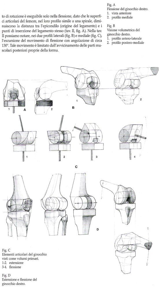 Character Design Collection: Bones Anatomy - Daily Art, references ...
