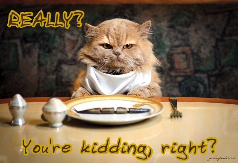 Pin by Reverend Joe Sondrup on Adorable animals Cats