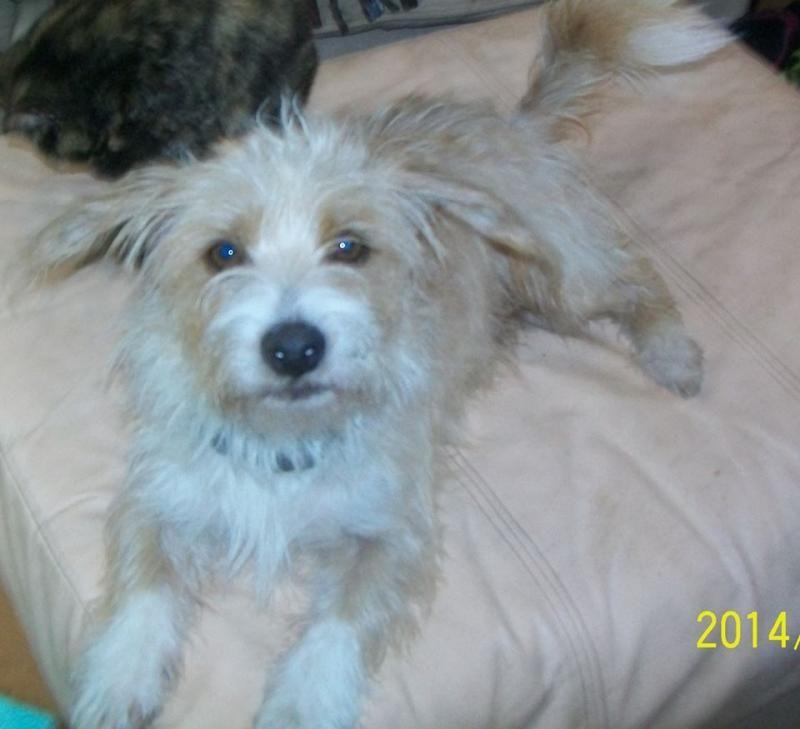 Adopt Jack On Scruffy Dogs