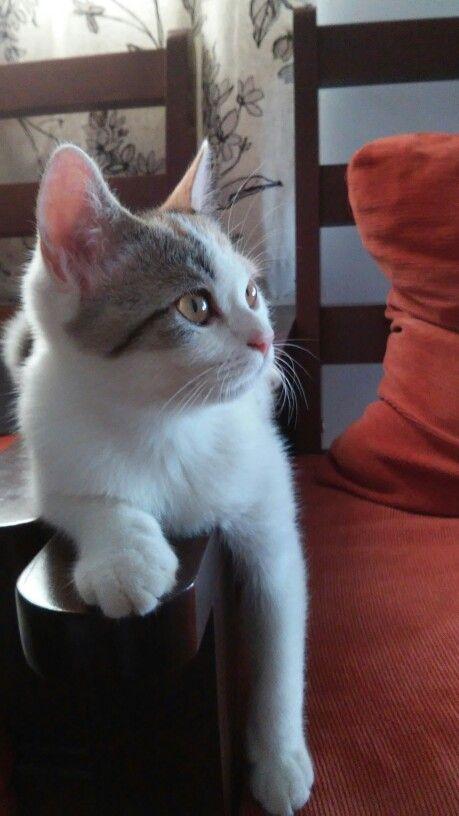 Emily cat.