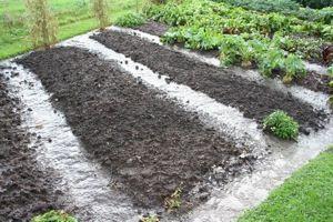 No dig growing  No dig gardening  www.charlesdowding.co.uk