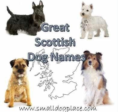 Scottish Dog Names S And Boys