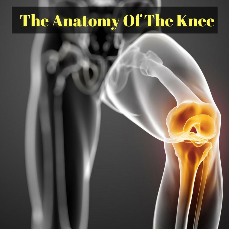 The Anatomy Of The Knee | Knee pain, Anatomy and Knee pain relief