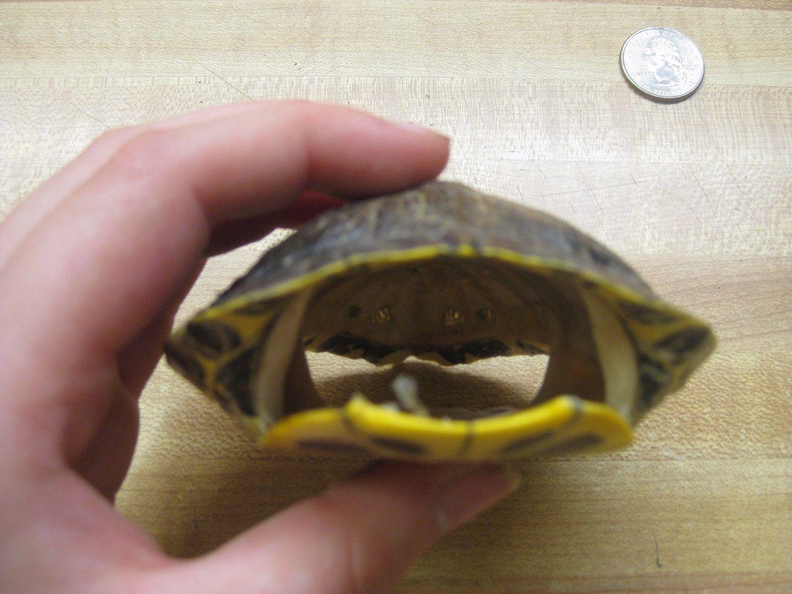 Turtle red ear slider reptille pinterest