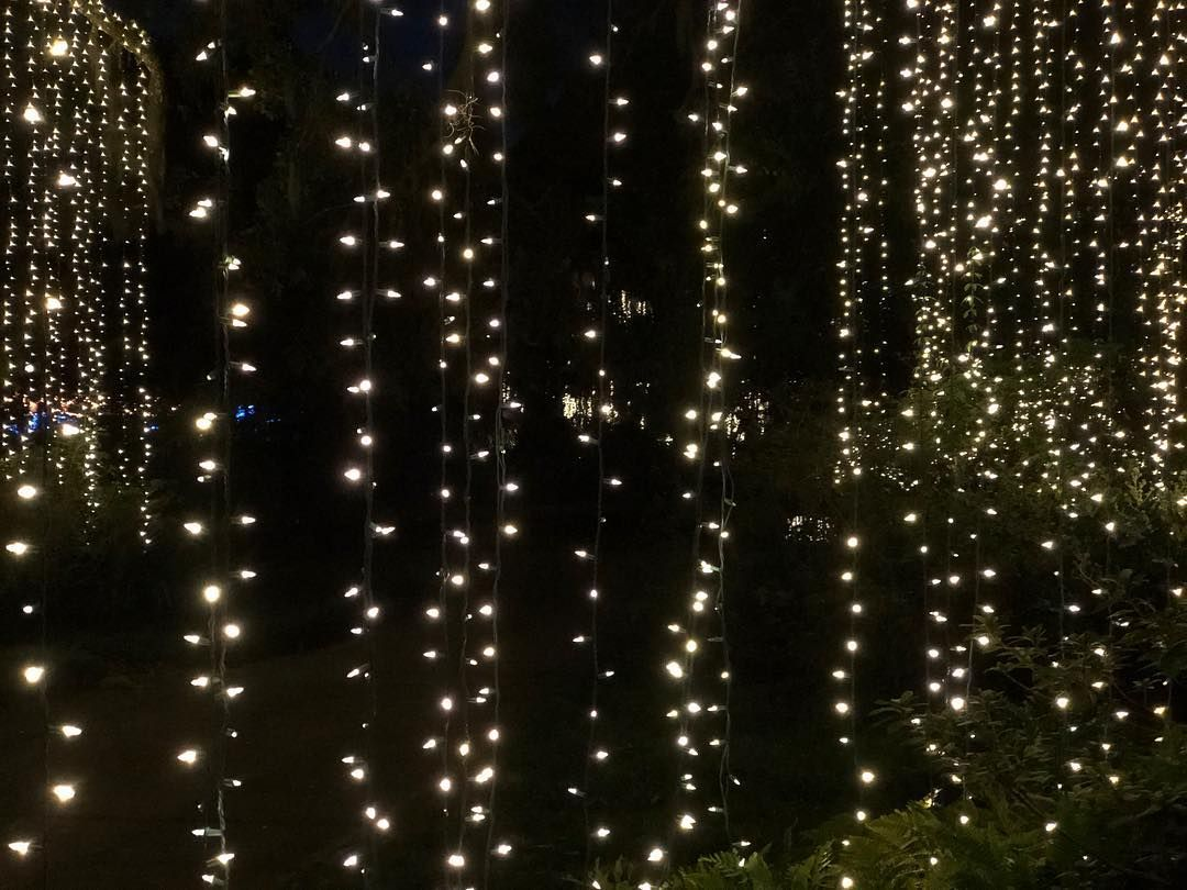 Happy New Year's Eve from Brookgreen Gardens 🕯🕯 If you are