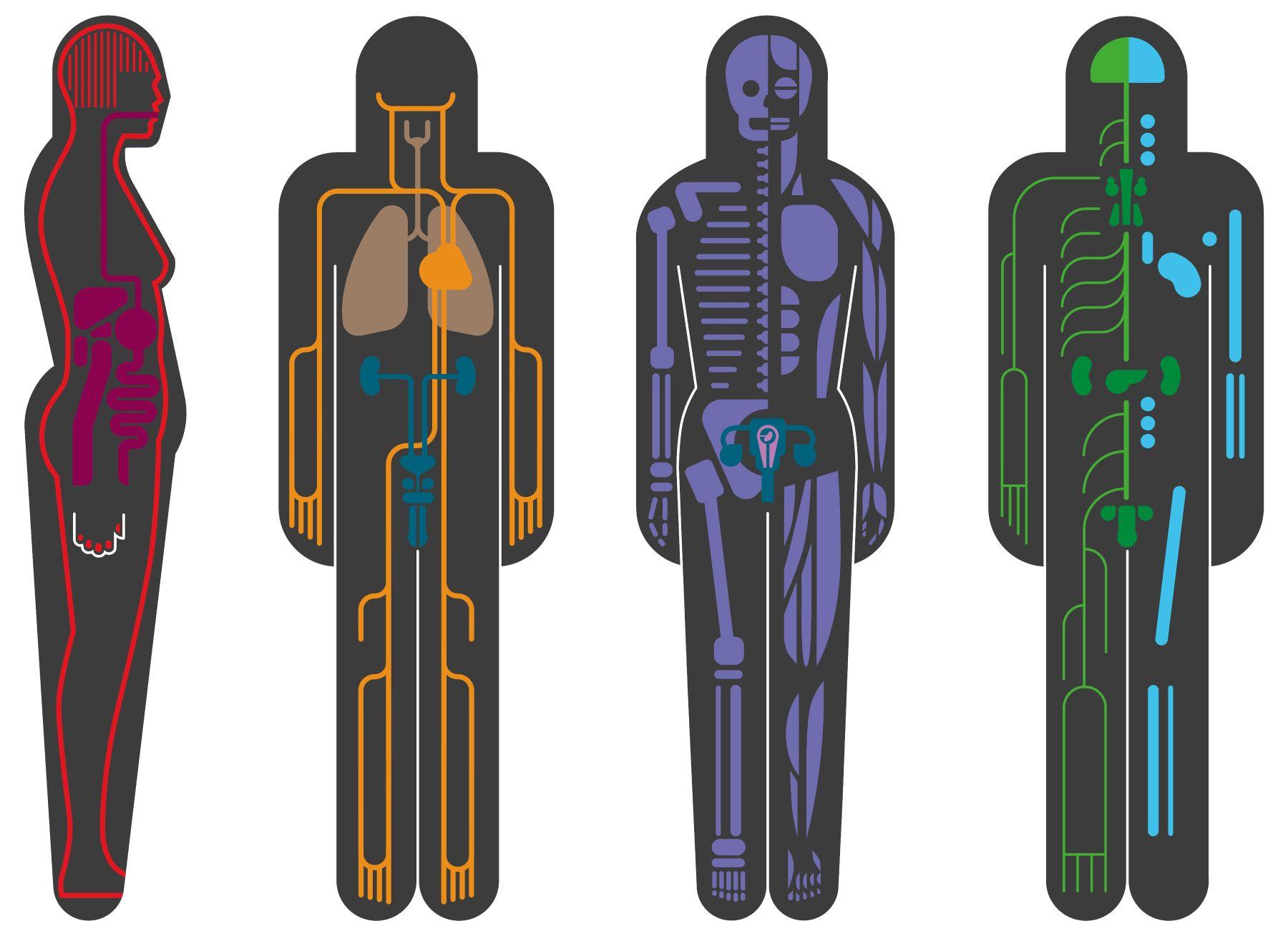 Royal Free Hospital pathology museum schematic