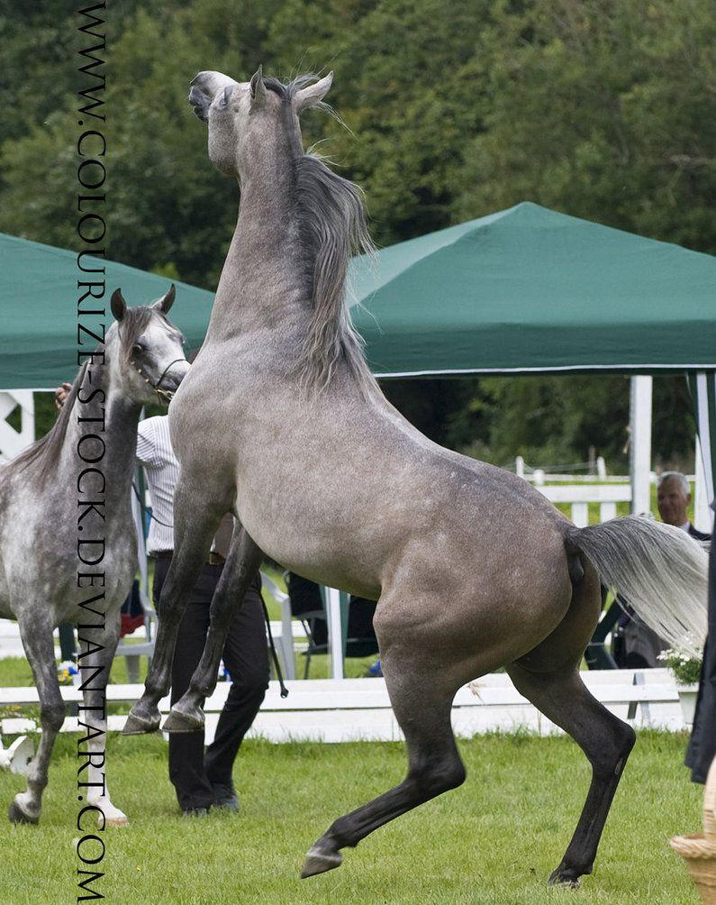Arabian 68 by ~Colourize-Stock on deviantART