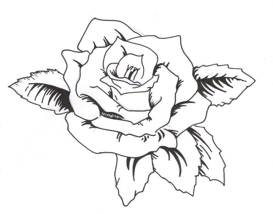 Latest Outline Rose Tattoo Design Jpg 900 707 Tattoo Outline Drawing Rose Tattoos Outline Drawings
