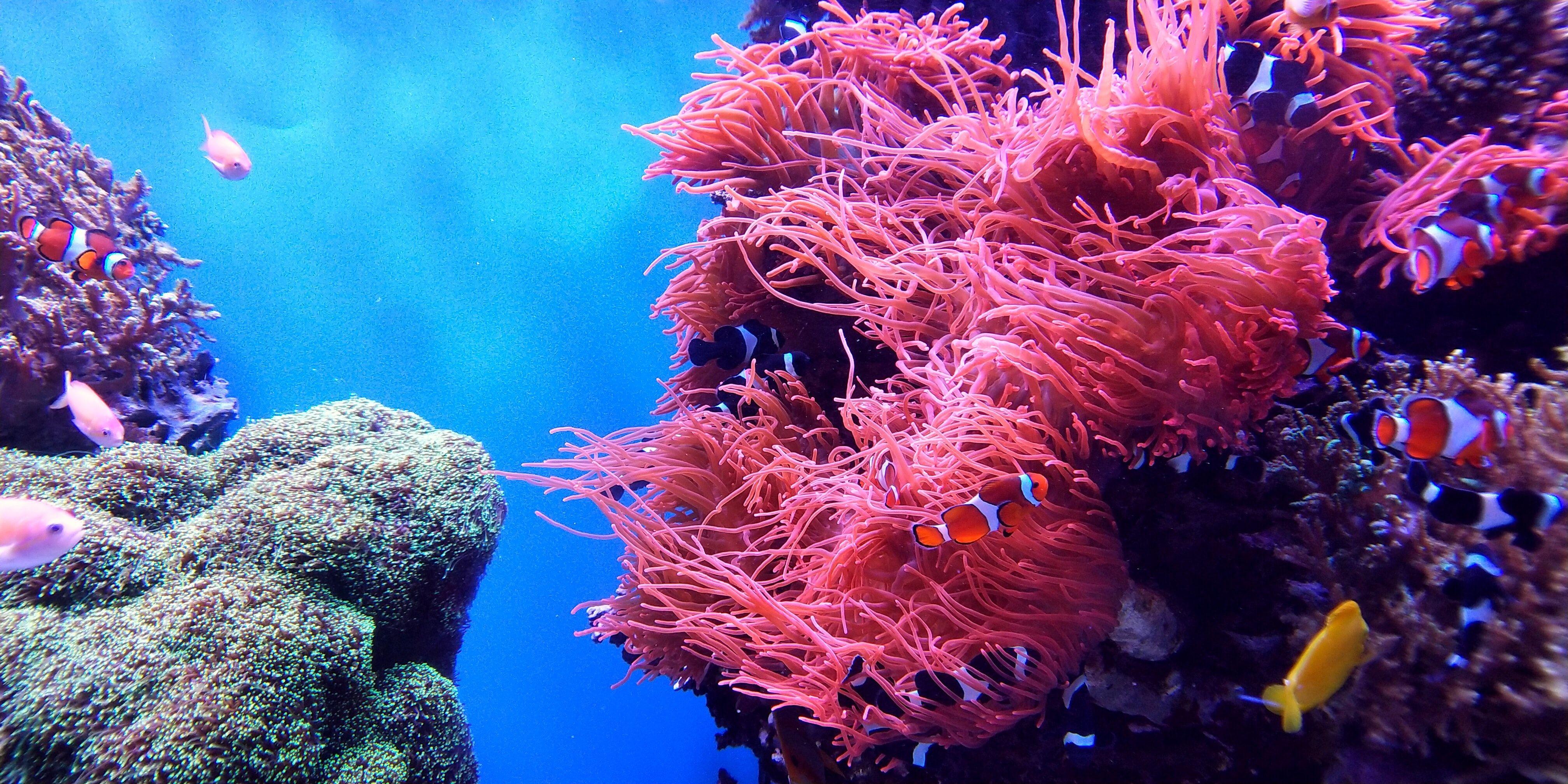 Funny Underwater Zoom Background