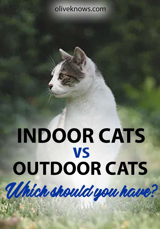 Indoor Cats Vs Outdoor Cats Outdoor Cats Indoor Cat Cat Training
