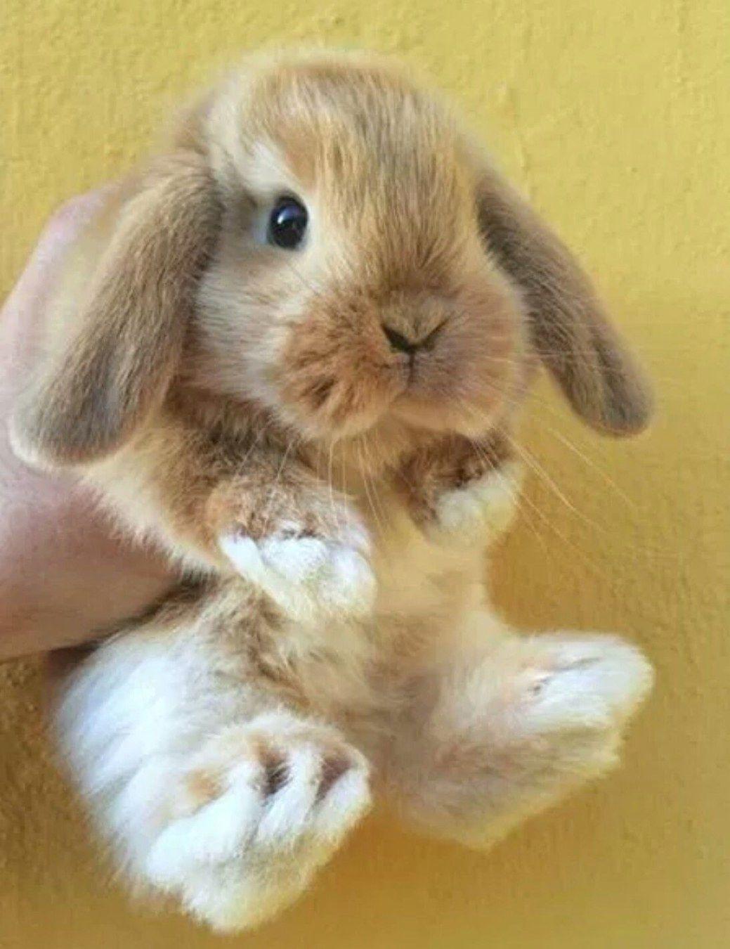 Gorgeous Rabbit Rabbitlove Cute Baby Animals Cute Baby Bunnies Pet Bunny