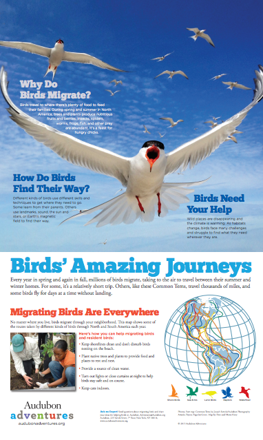 Downloadable Classroom Posters How And Why Birds Migrate With Accompanying Teacher S Guide Why Do Birds Classroom Posters Why Do Birds Migrate