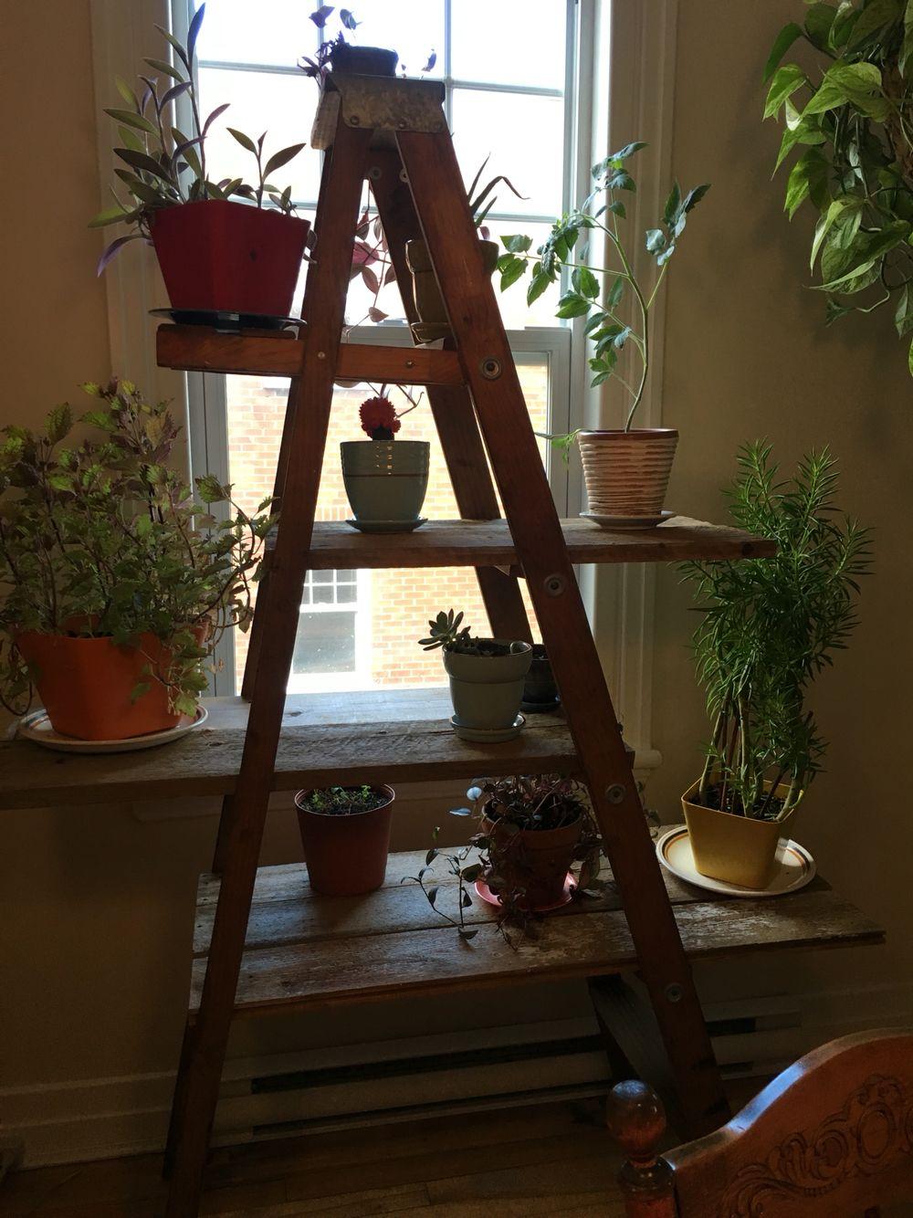 petite tag re plantes rustique une vieille chelle en. Black Bedroom Furniture Sets. Home Design Ideas