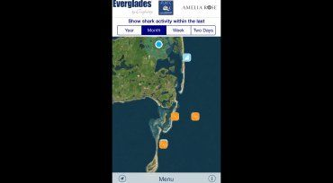 'Sharktivity' app lets users track sharks and report