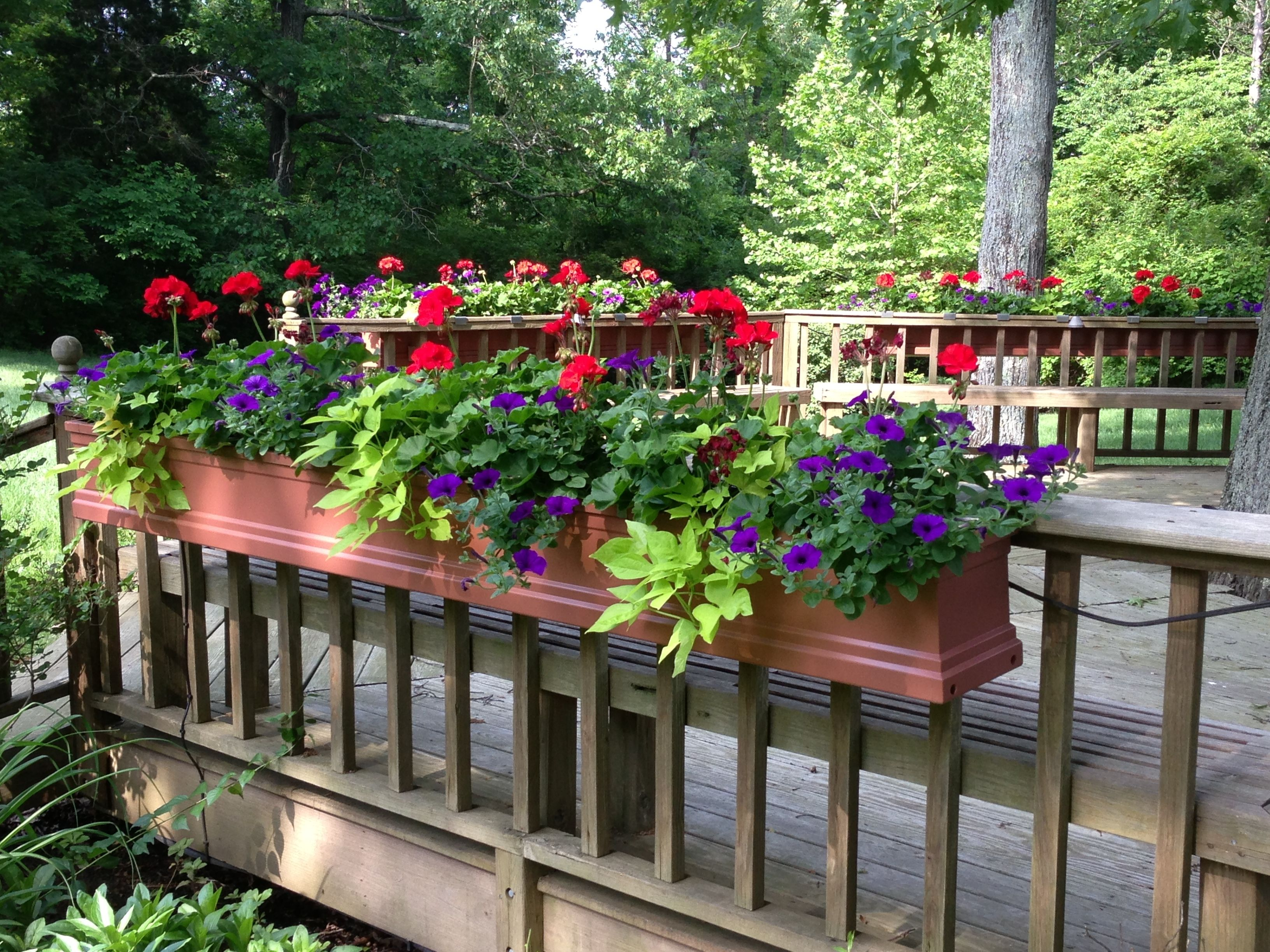 Window Boxes For Deck Railing Too My Flower Service Deck