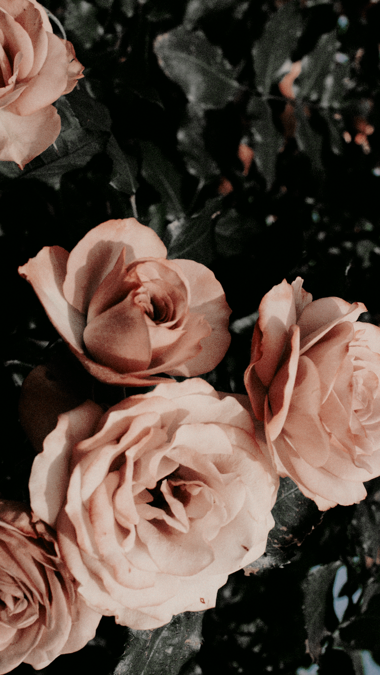 Flowers Aesthetic Lockscreen In 2020 Tumblr Backgrounds Rose Wallpaper Aesthetic Iphone Wallpaper
