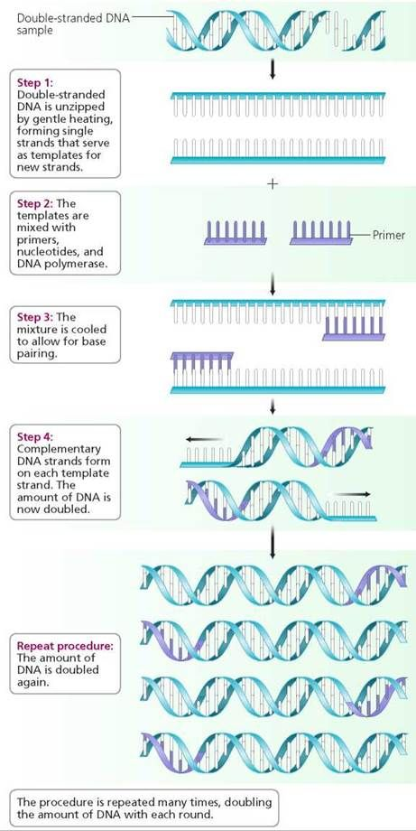 Dna And Biotechnology Biology Of Humans Biotechnology Dna