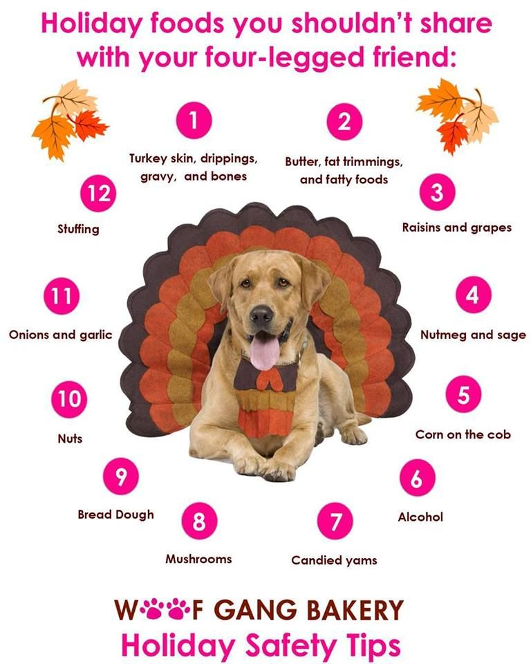 Here are some tips for Thanksgiving and your furbabies 🦃