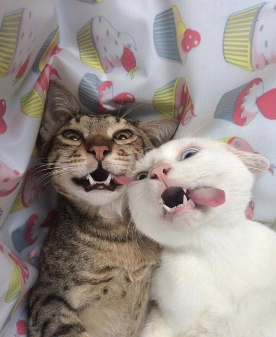 New Funny Friends  Find a friend who's as crazy as you #cats 10