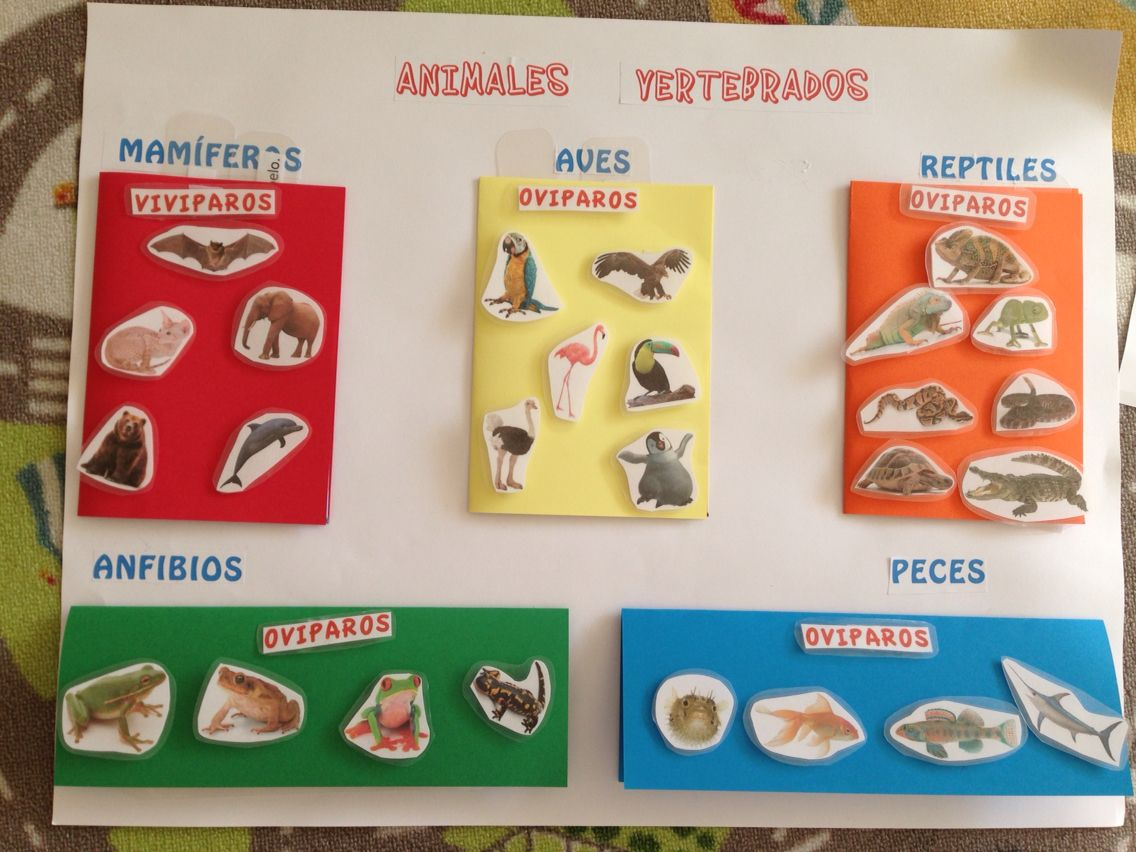 Animales Vertebrados E Invertebrados Vertebrados E Invertebrados Vertebrados Animales Vertebrados