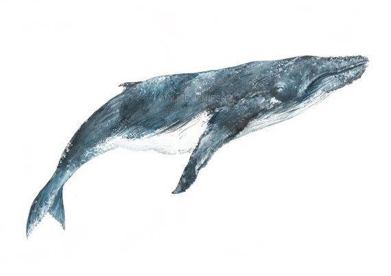 Humpback Whale Art Print on Etsy, $19.35 | anhelos | Pinterest ...