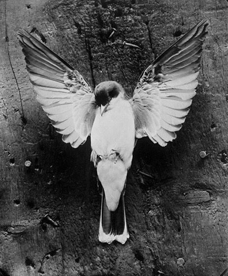 Pin Von Jasper Auf The Death Pangs Of A Chaos God Tiere Mutter Natur Tierfotografie