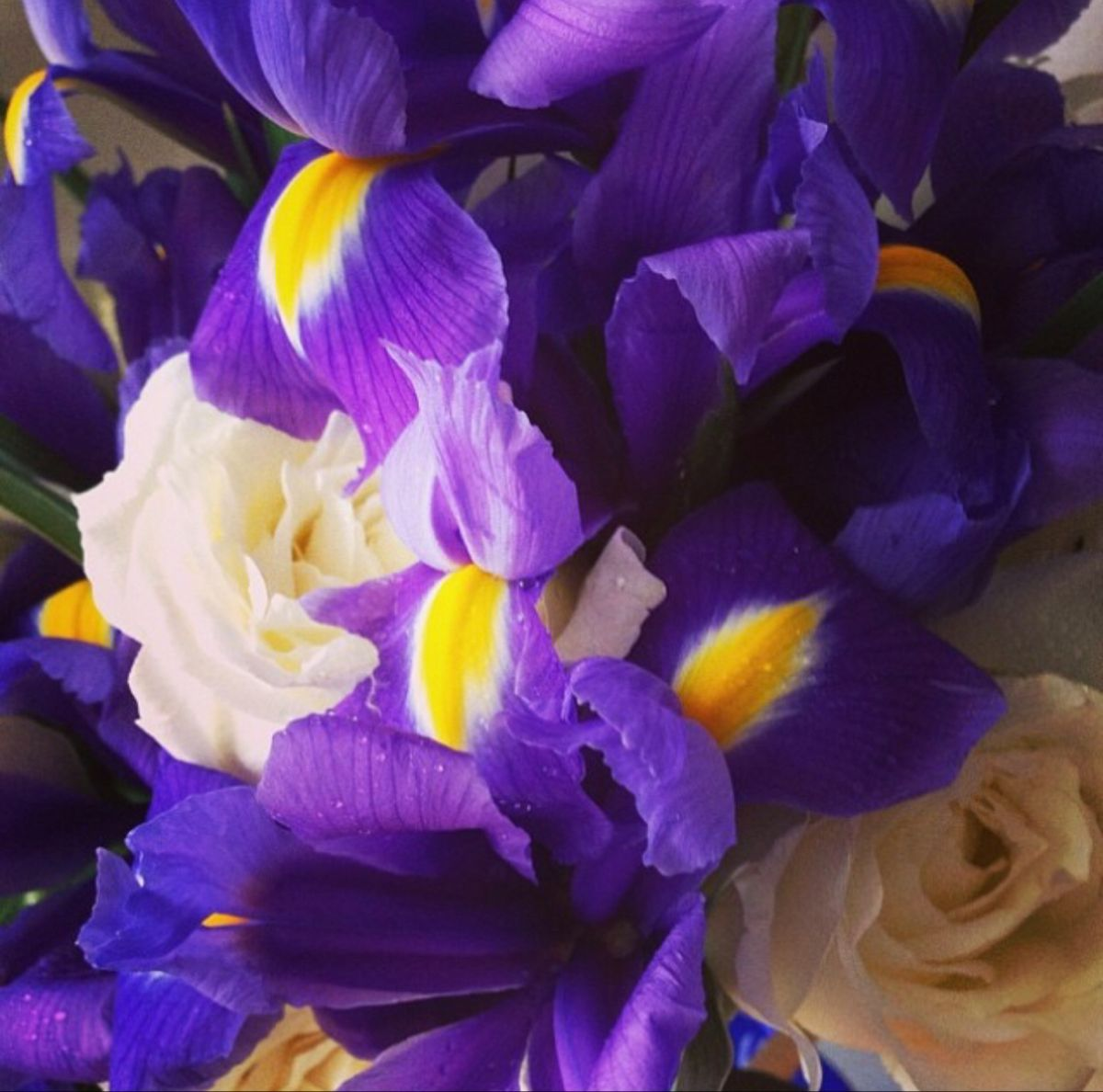 Iris Flower In 2020 Iris Flowers Flowers For Sale Flowers