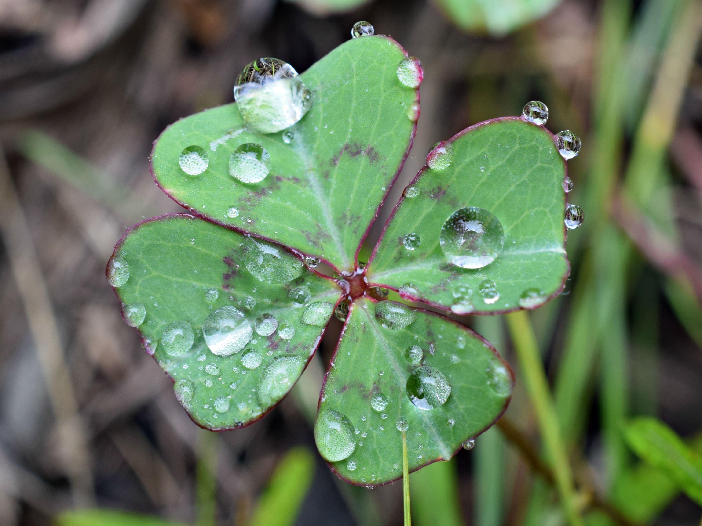 Gotas sobre hojas. Fotografía Fernando Ramos