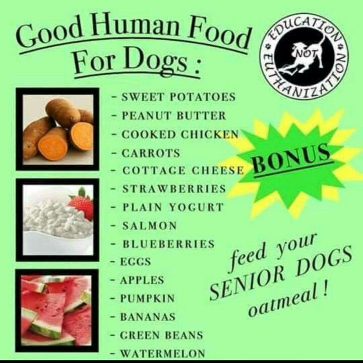 Pin By Susan Wohltman On Pets Human Food For Dogs Healthy Dog