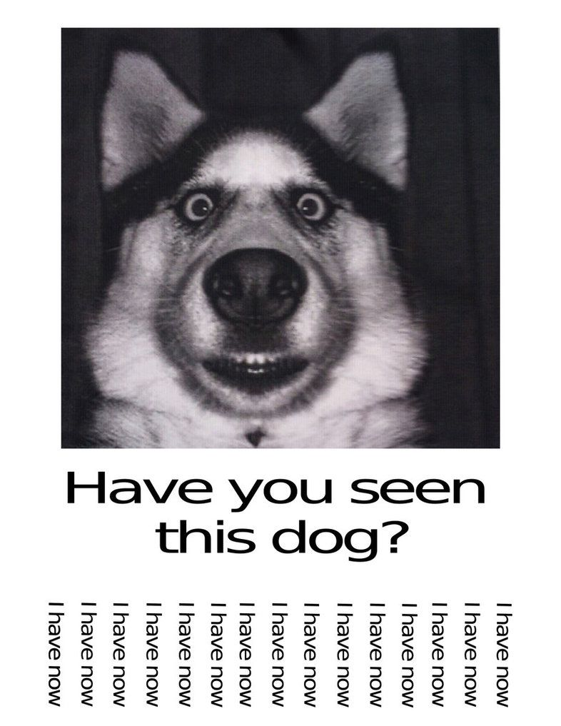 Have You Seen This Dog : DanelectroT, DeviantArt, Funny, Pictures,, Animal, Photos,
