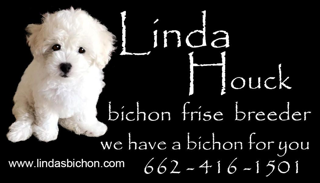 We Love Our Bichon Frise Here To Help You Get Your Bichon Puppy For A Fur Ever Home Vet Certified Based In Louisia Bichon Frise Breeders Bichon Frise Bichon