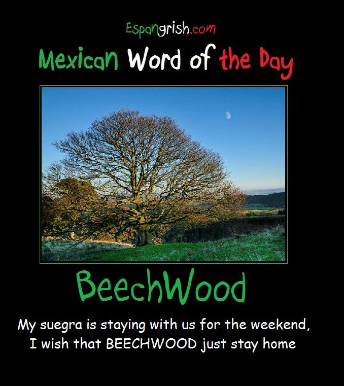 Mexican Word Of The Day Beechwood Mexican Words Word Of The Day Mexicans Be Like