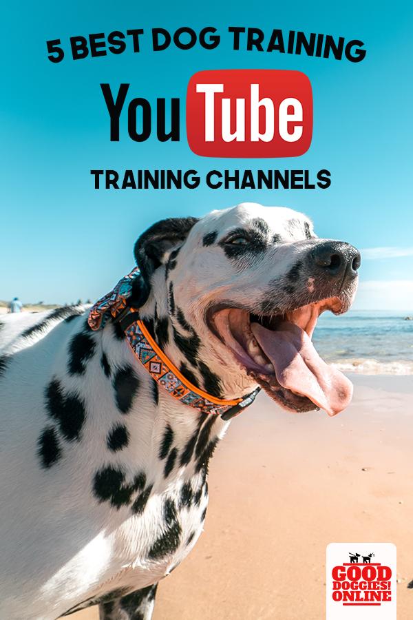 5 Best Dog Training YouTube Channels | Dog Training | Best dog