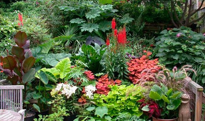 Jardin tropical buscar con google jardin pinterest for Jardines pequenos tropicales