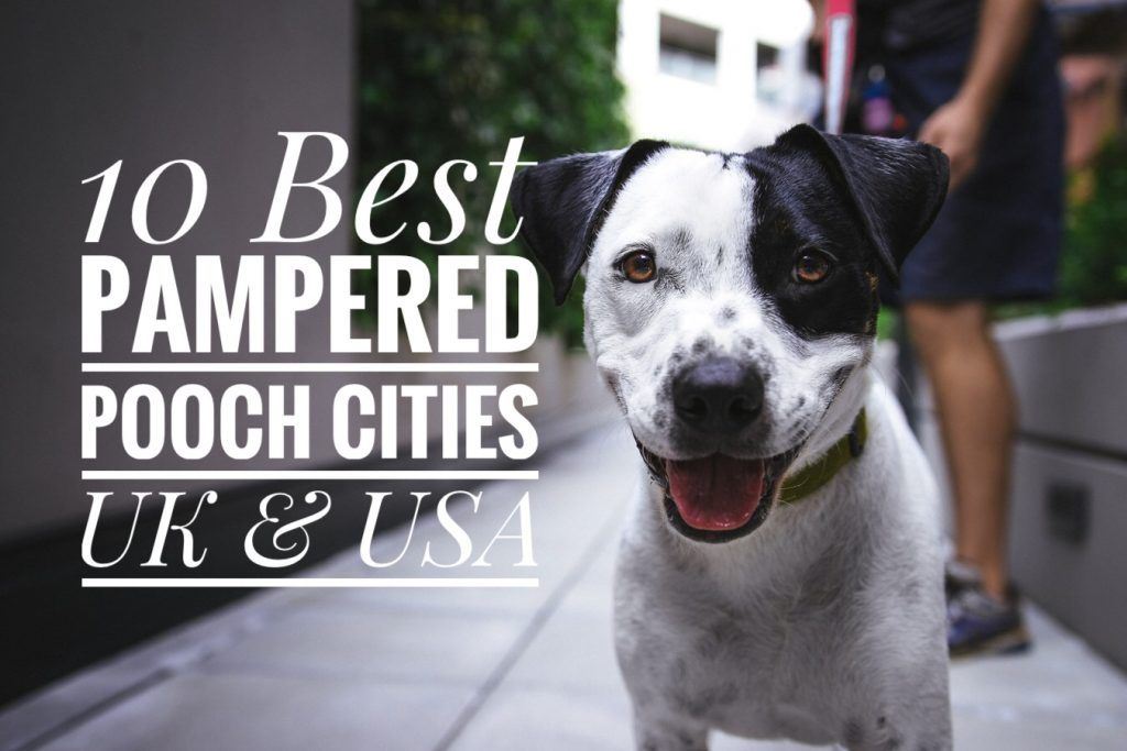 10 Best Pampered Pooch Cities Uk Usa Dog Clicker Training