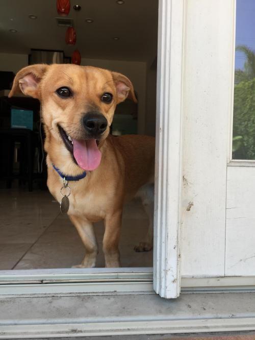 Gayweho Dogs 4 U On Dogs Small Dogs Adoption