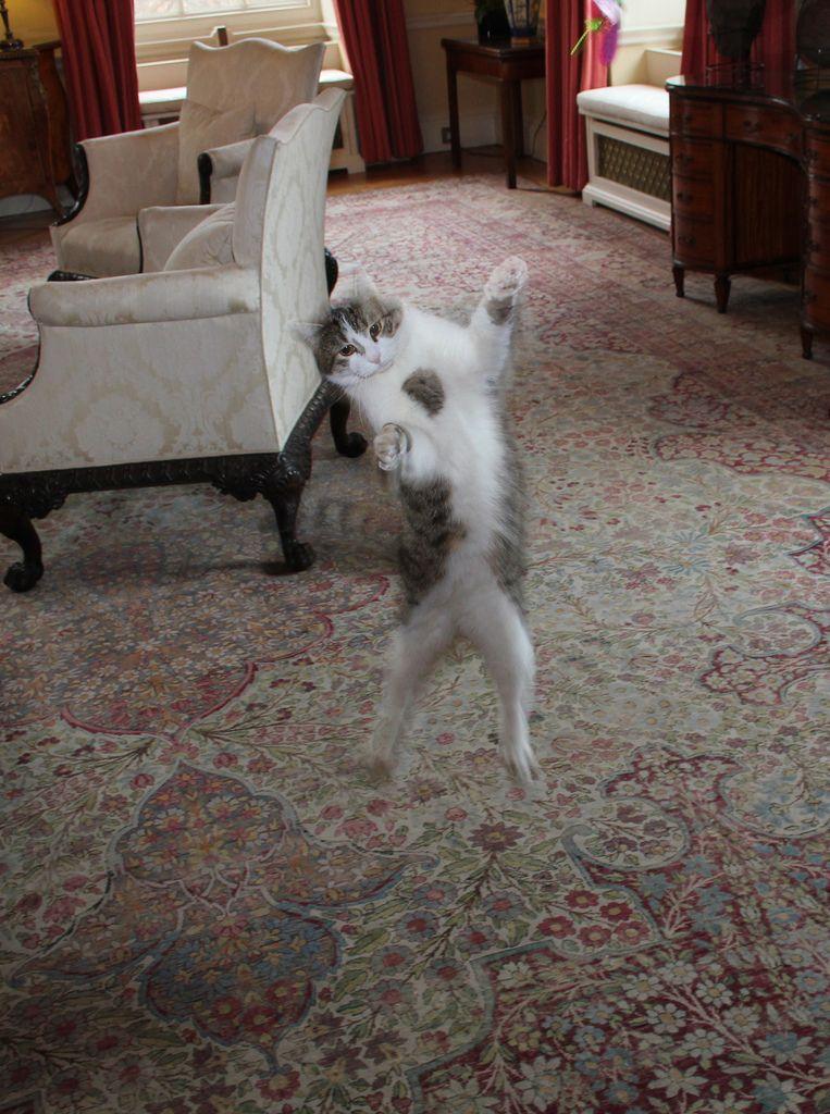 Number 10 Cats Cat Celebrating Dancing Cat