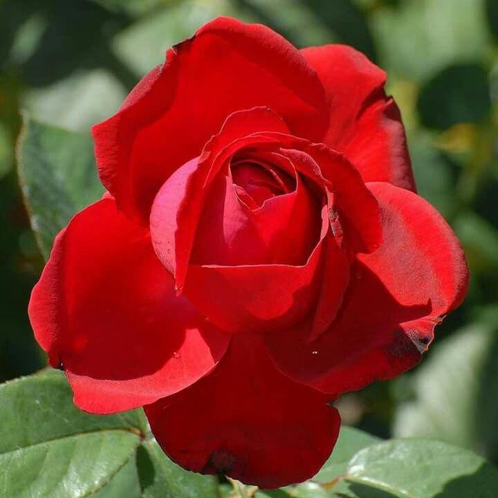 Flor de color rojo :)