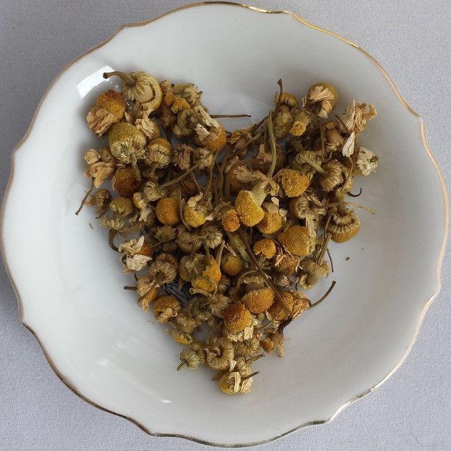 Egyptian Chamomile - 2 oz Loose Leaf Herbal Tisane