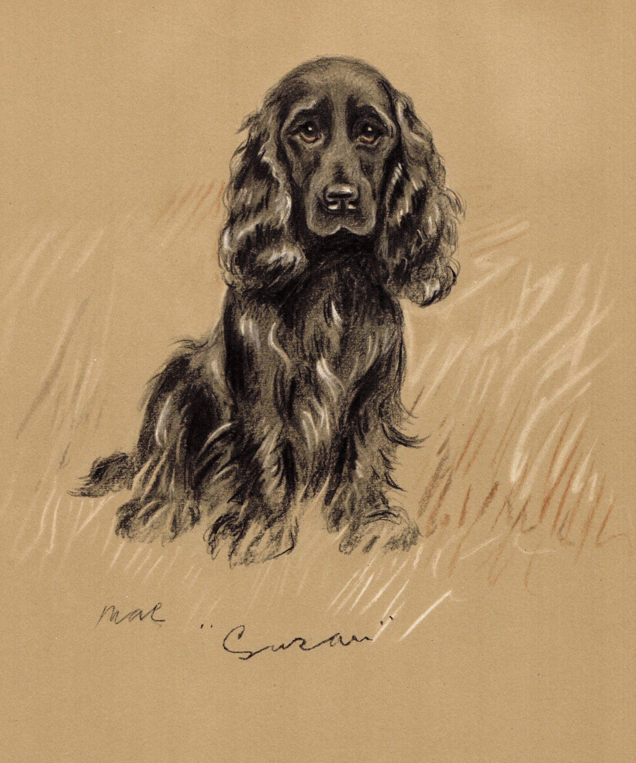 1940 Antique Cocker Spaniel Dog Print Vintage Lucy Dawson Etsy In 2020 Dog Print Art Dog Art Puppy Prints