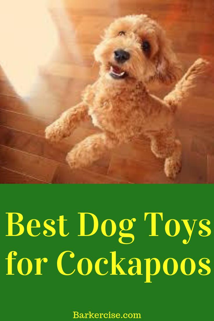 Best Toys For Cockapoos In 2020 Cockapoo Puppies Best Dog Toys Dog Toys