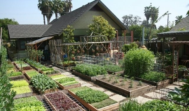 How to Grow 6,000 Lbs of Food on 1/10TH Acre   Farm ...