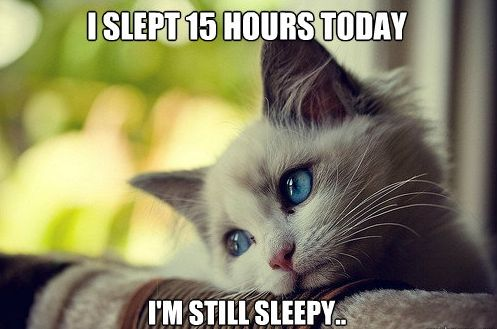 The life of a cat ...