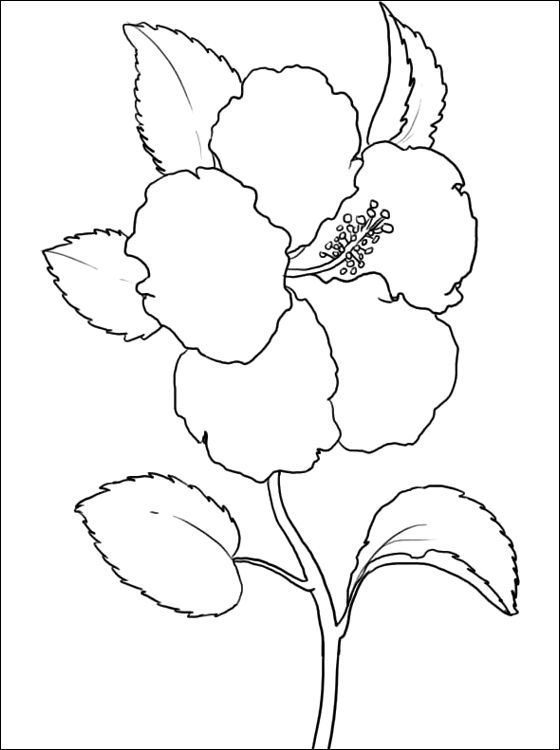 Hibiscus Coloring Page Coloring Pages Embroidery Flower Line