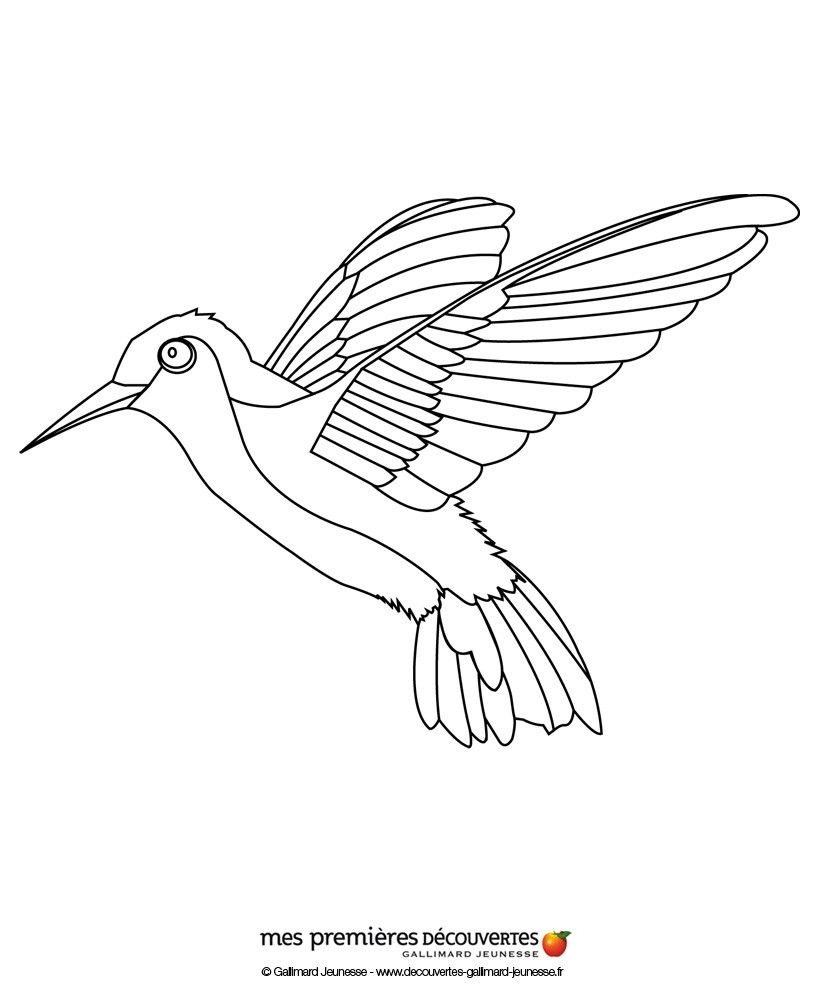 colibrí | pájaros y aves | Pinterest | Colibri, Decoración en hierro ...