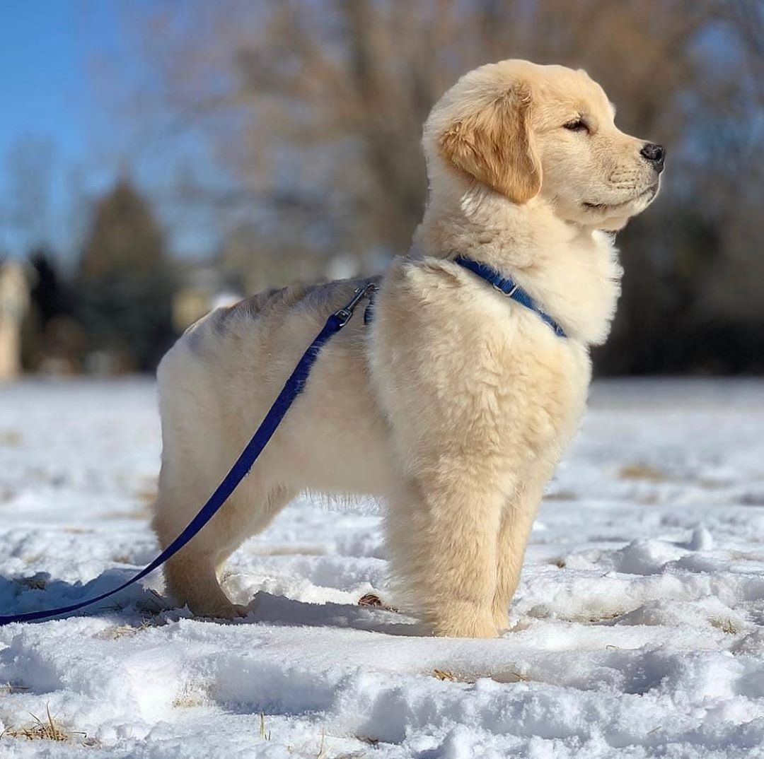 5 Tips For Finding The Best Pet Insurance Puppies Cute Baby Animals Cute Animals