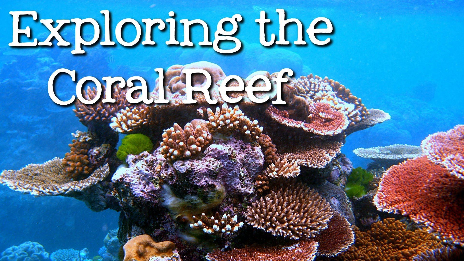Exploring The Coral Reef Learn About Oceans For Kids