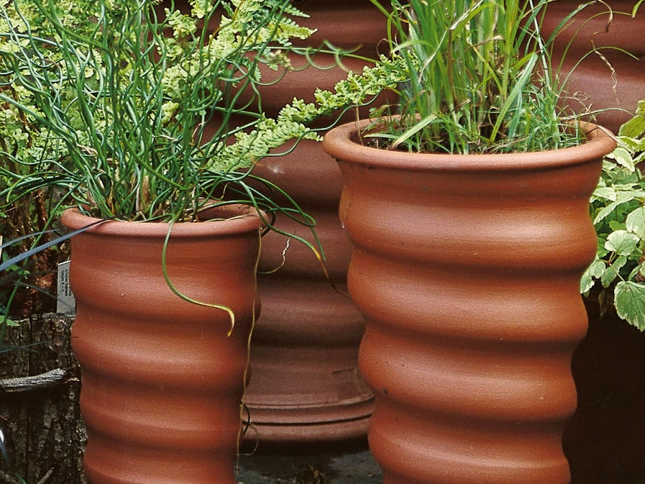 grow guide: the best pots for cold weather and ants in the compost
